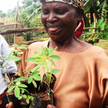 Bäume schenken statt Blumen – Baum als Geschenk online pflanzen mit Treedom