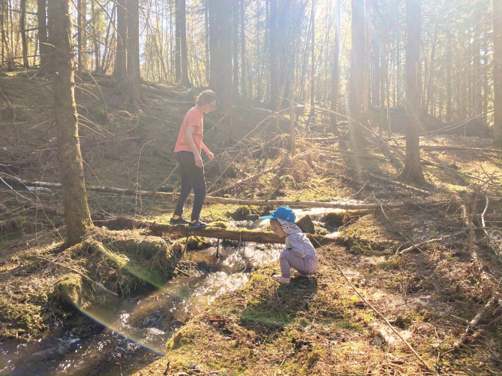 Den Wald mit Kindern erkunden, spielend lernen im Wald, Spielideen für den Spaziergang durch den Wald. Ich bin das Eichhörnchen Buchvorstellung