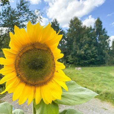 Gärtnern mit Kindern – Tipps und Projektideen, die garantiert gelingen